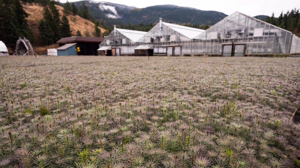 Tolko Eagle Rock Division in Armstrong, BC