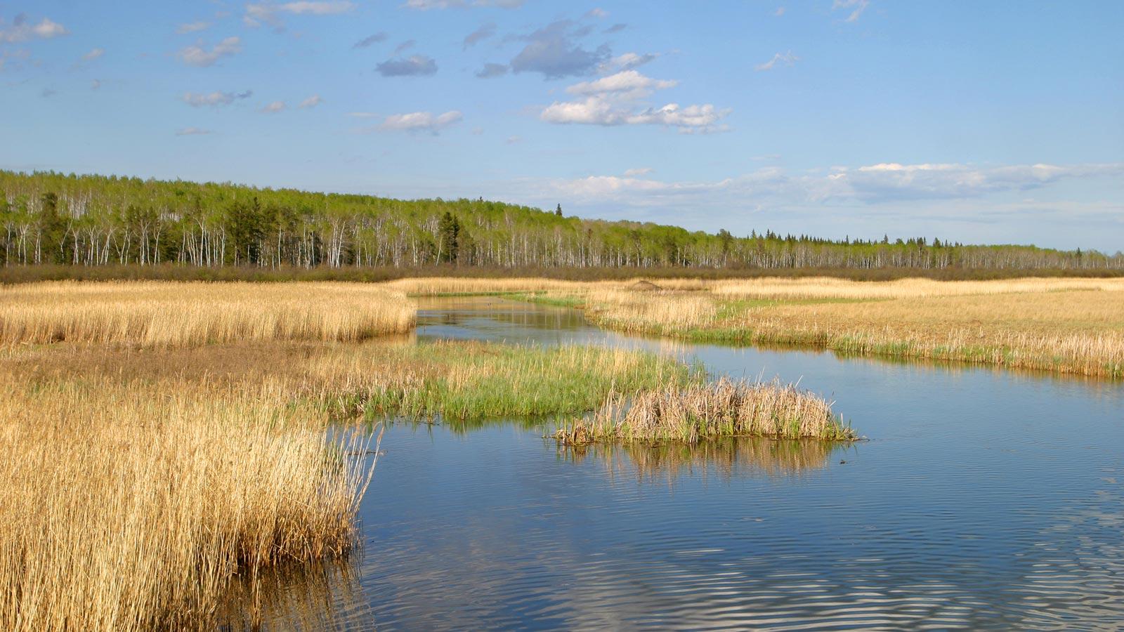 Woodlands area with blue sky