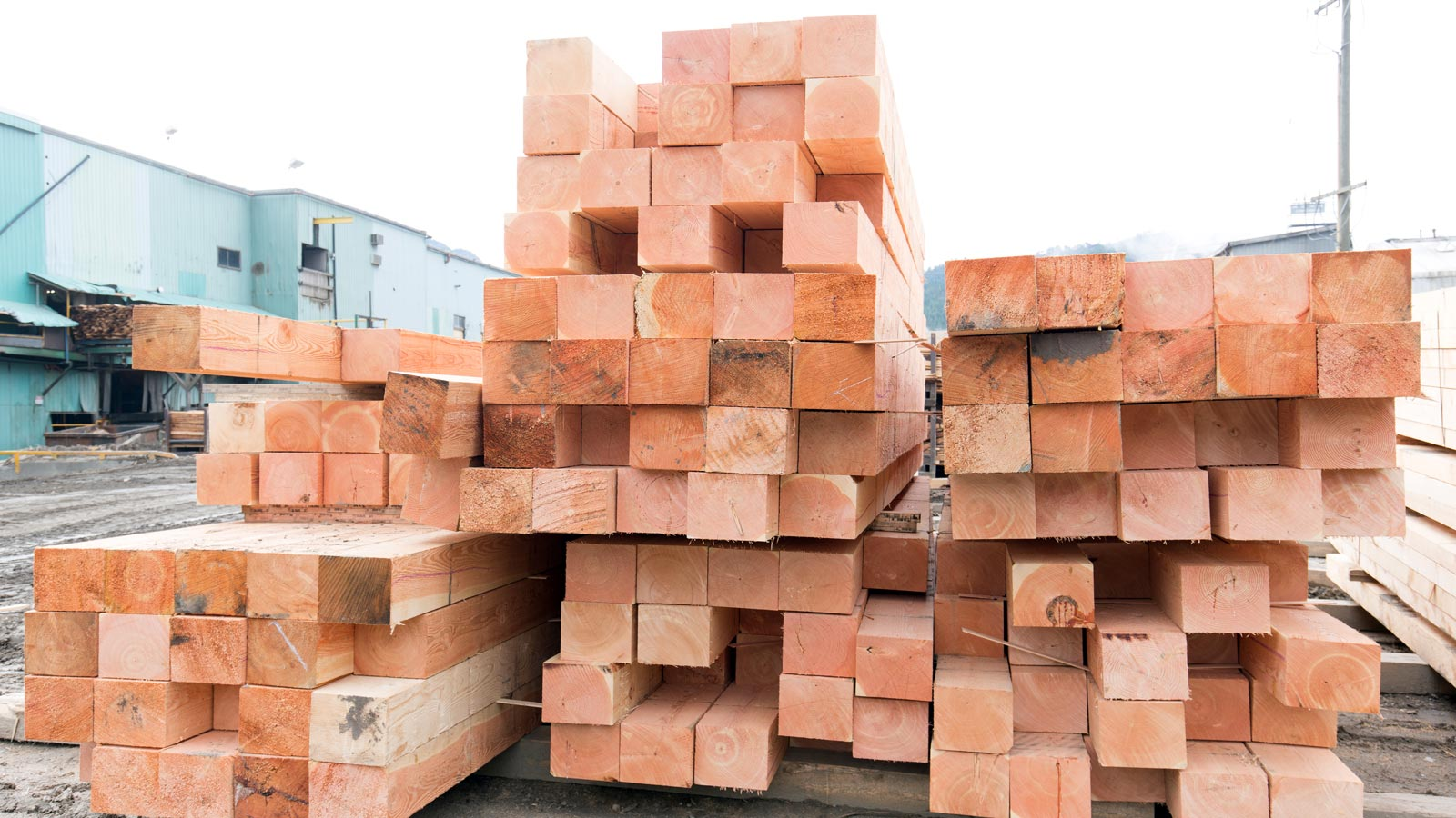 Tolko timbers stacked in yard